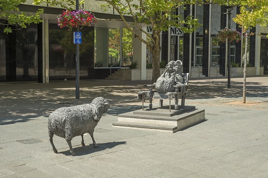 Ainslies_Sheep 550
